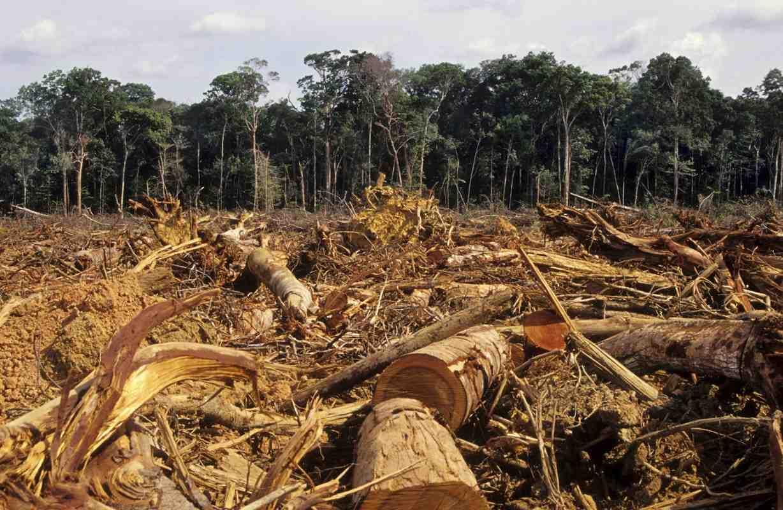 Amazzonia-deforestazione1